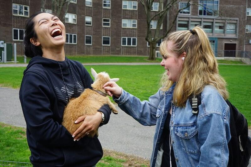 animal stress relief fair