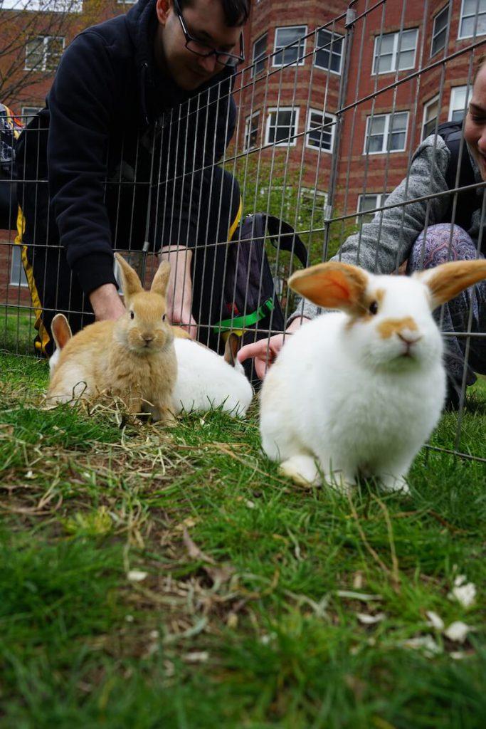 cute little bunnies floppy ears