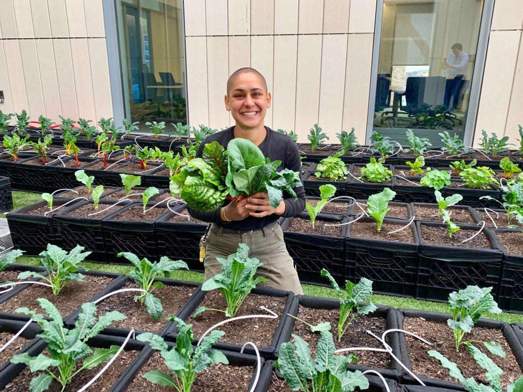 harvesting organic veggies