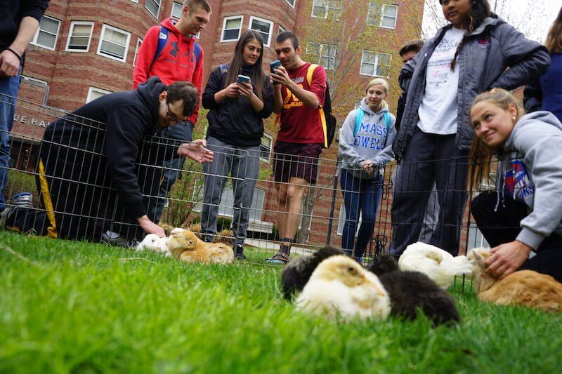 petting farm stress relief