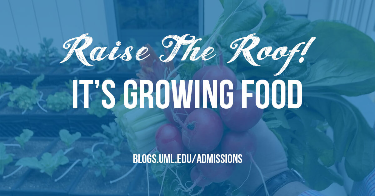 raise the roof it's growing food