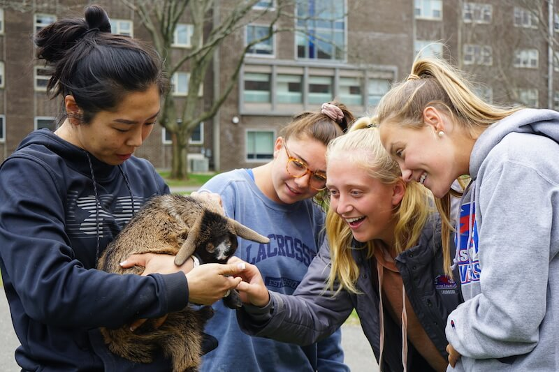 students petting baby goat
