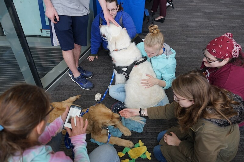 two therapy dogs with students