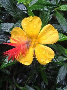 Butterfly Garden Costa Rica 2014