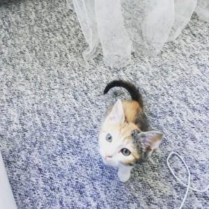 My apartment has a kitten!