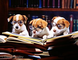 Image result for puppy reading