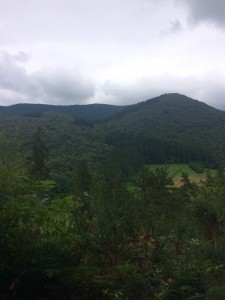 """A brief glimpse of the view along our """"muy facil"""" excursion yesterday"""
